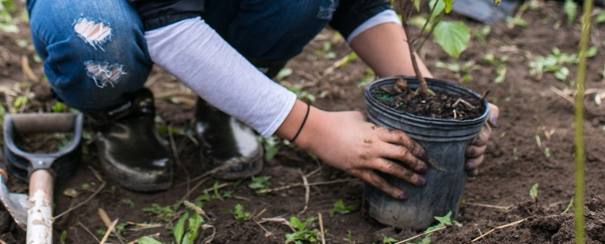 girl takes part in Meadoway planting event