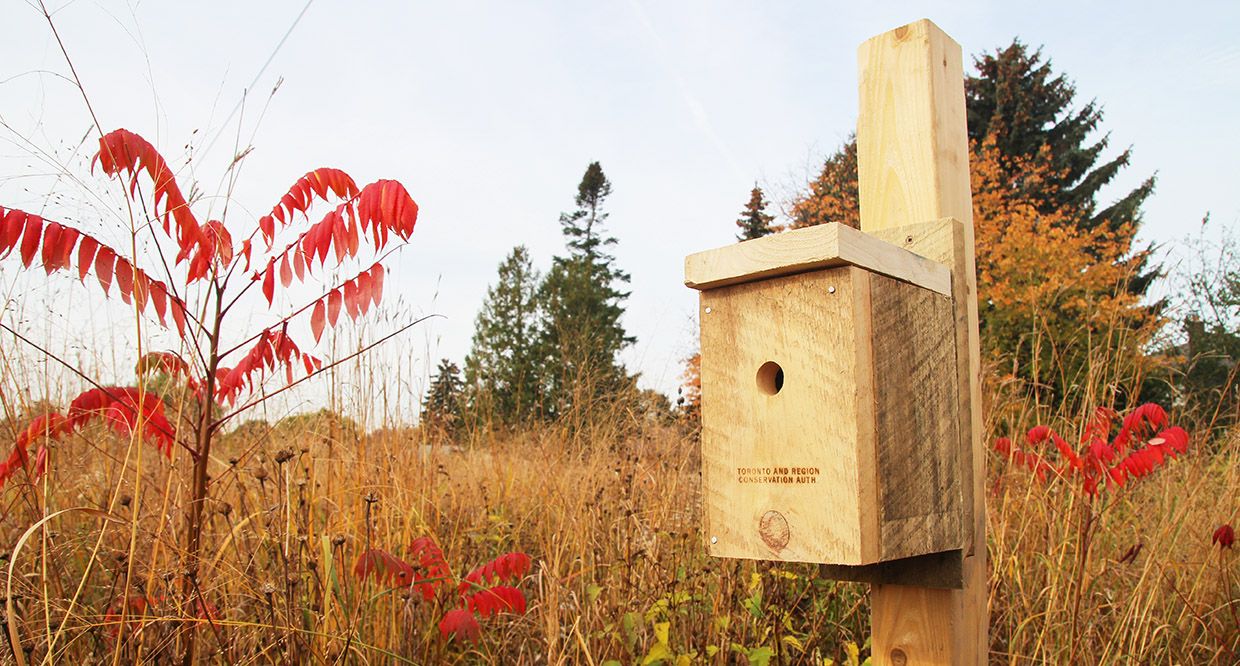 nest box in meadow
