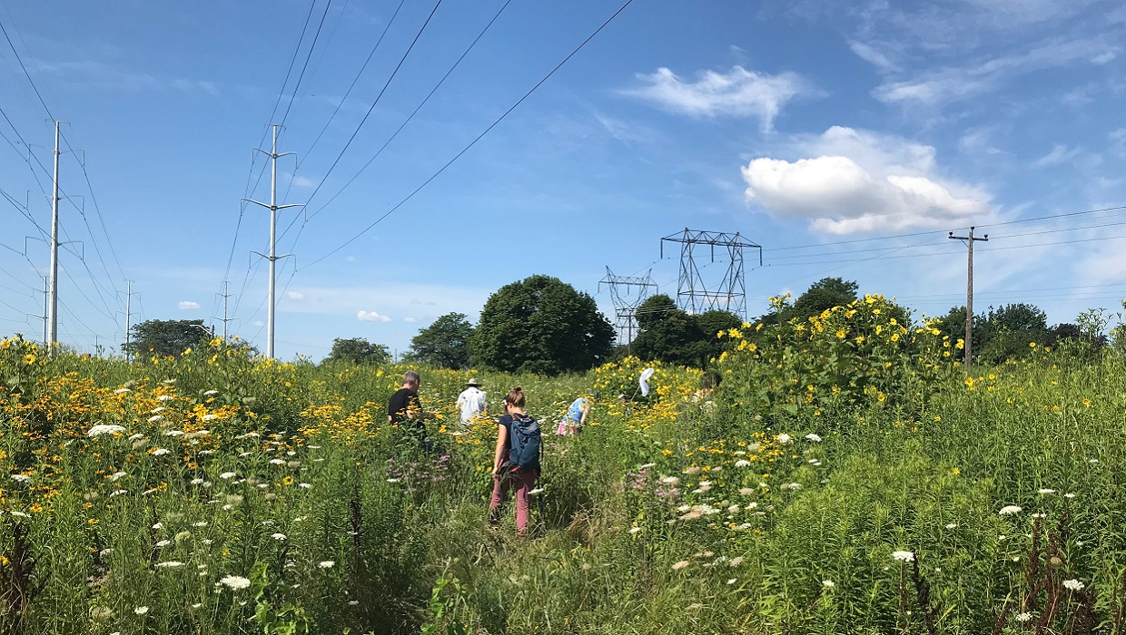 citizen scientists participate in BioBlitz in The Meadoway