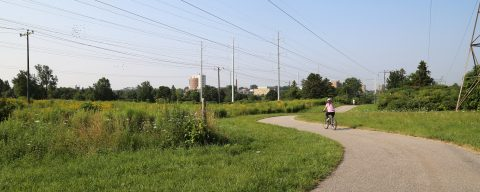 cyclist on Scarborough Centre Butterfly Trail
