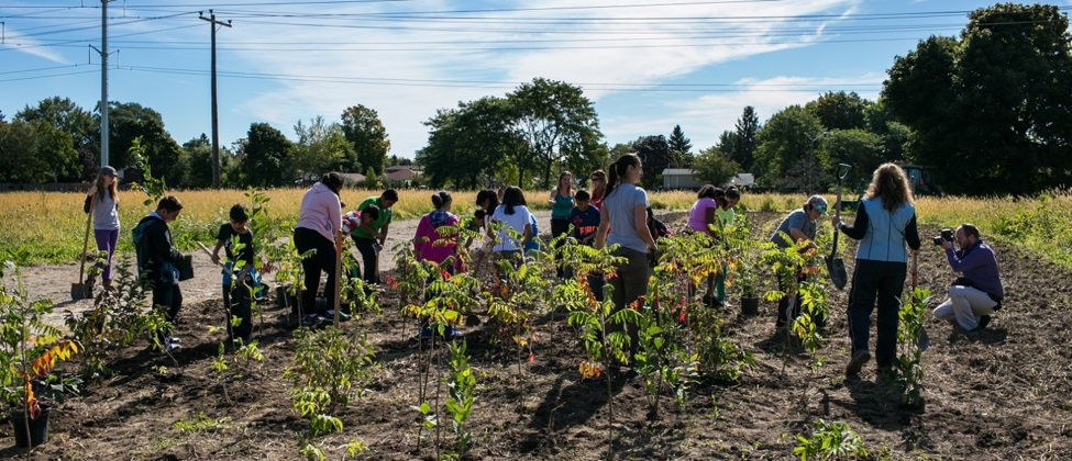 pollinator planting event on Scarborough Centre Butterfly Trail