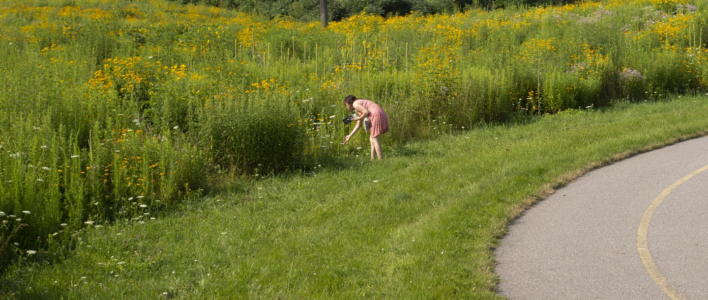 woman on trail enjoys the biodiversity of The Meadoway as she examines wildflowers