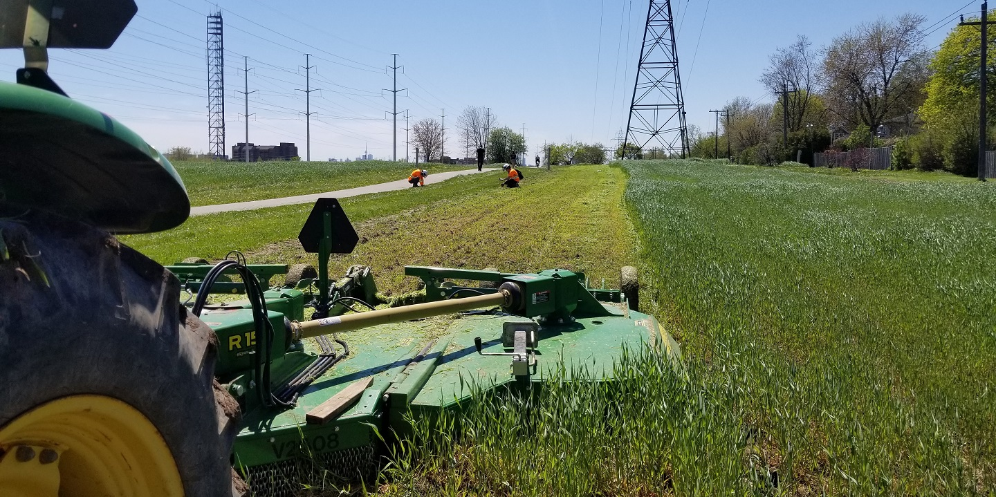 grass mown buffer in the Gatineau hydro corridor