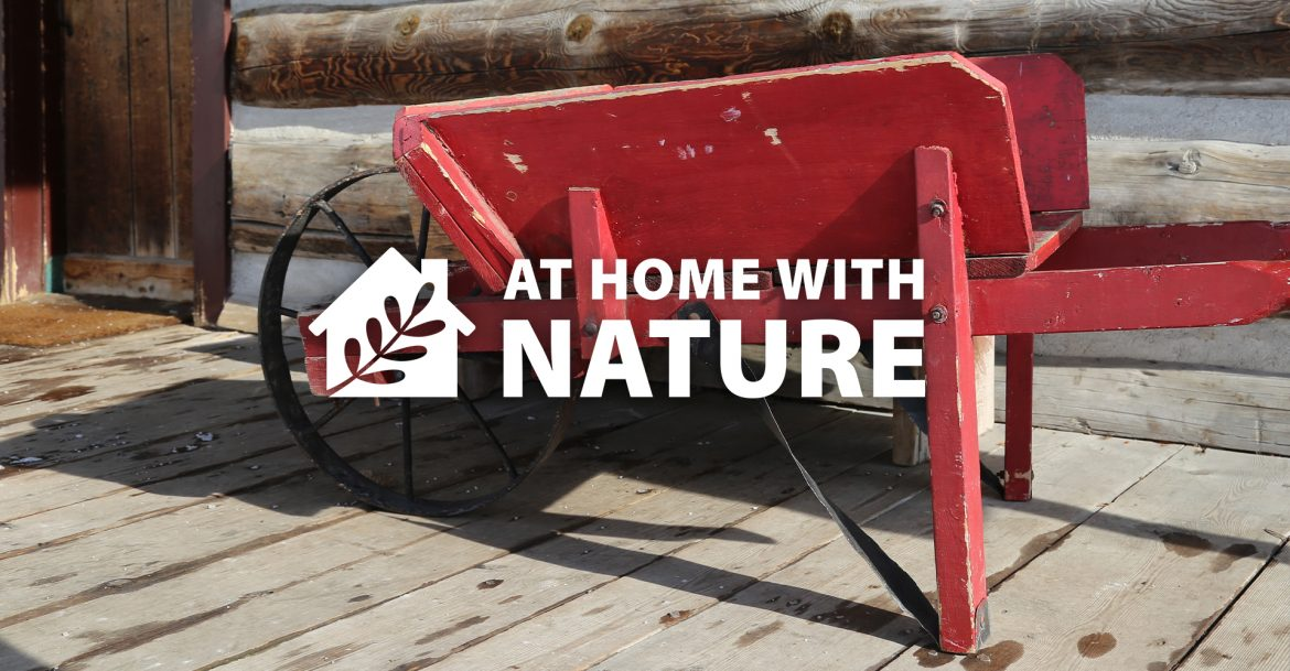 At Home With Nature - Wheelbarrow