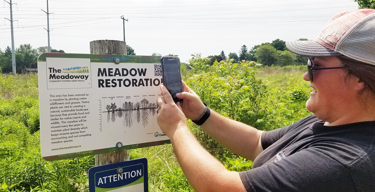 TRCA restoration team member in The Meadoway scans QR code on sign with smartphone