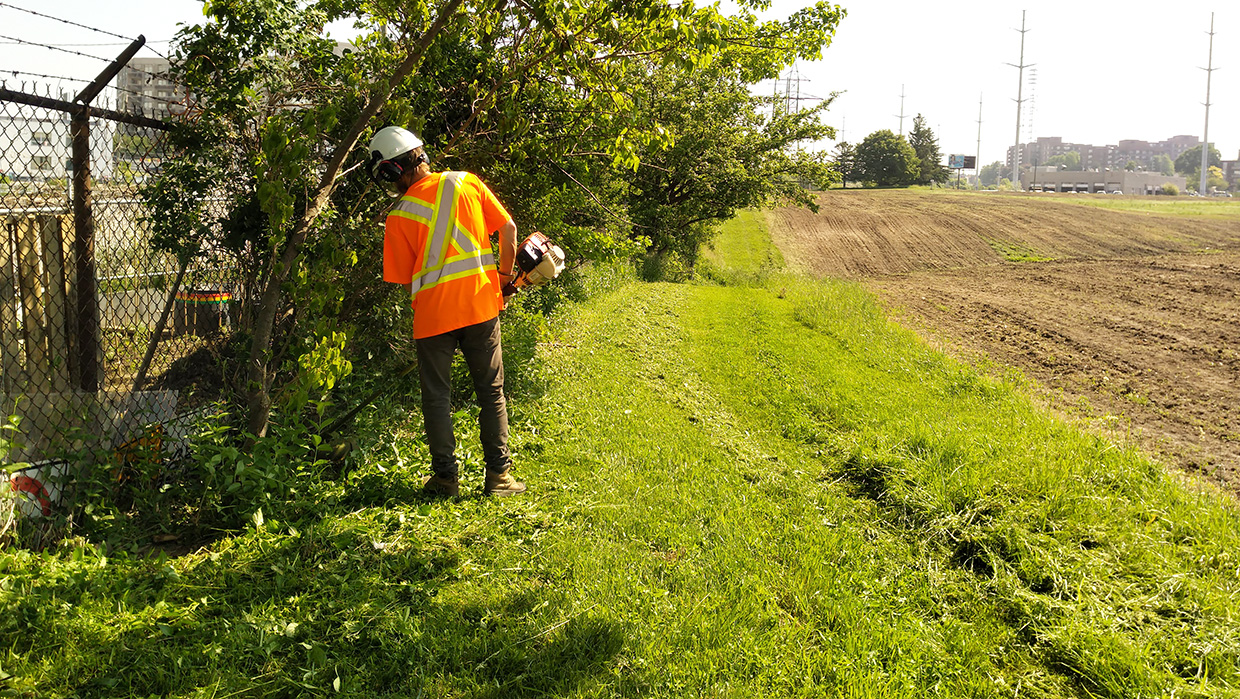 TRCA restoration crew member tends to mown buffer along The Meadoway