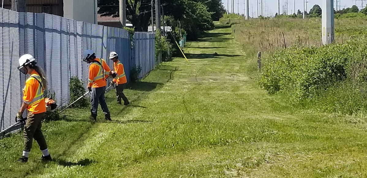 TRCA restoration team members trim along fence to control spread of invasive plant species
