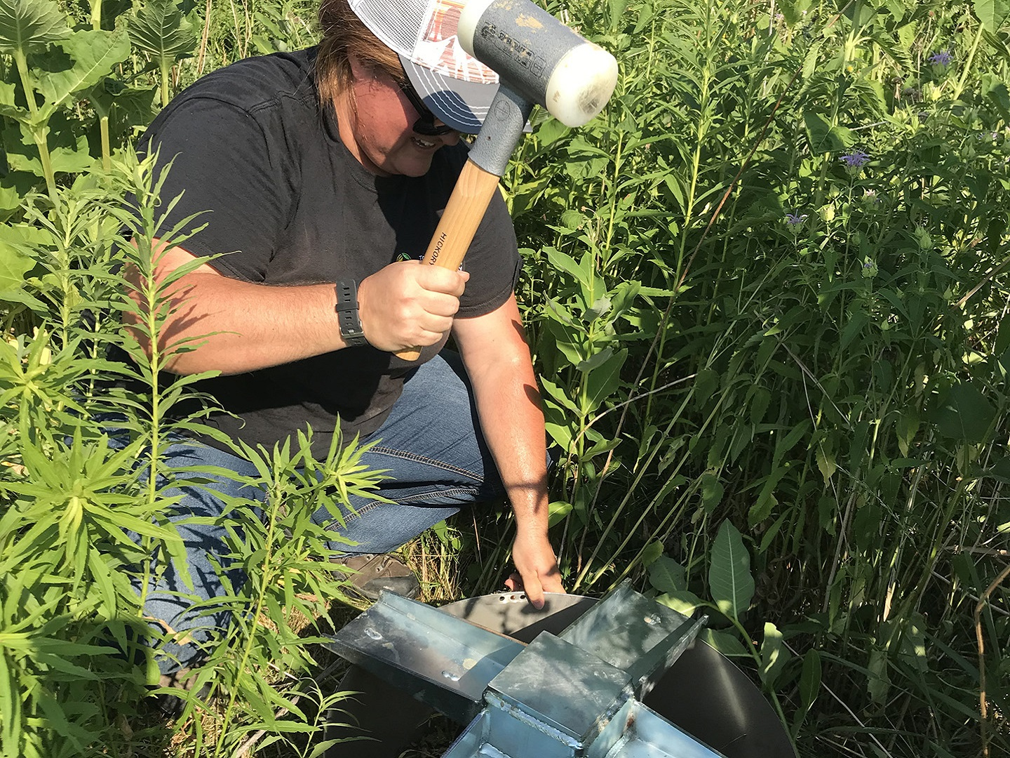 TRCA restoration team member helps to conduct infilatration rate research in The Meadoway