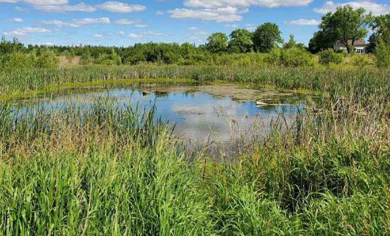 Bob Hunter Memorial Park restored wetland north of 14th Avenue photographed in 2020