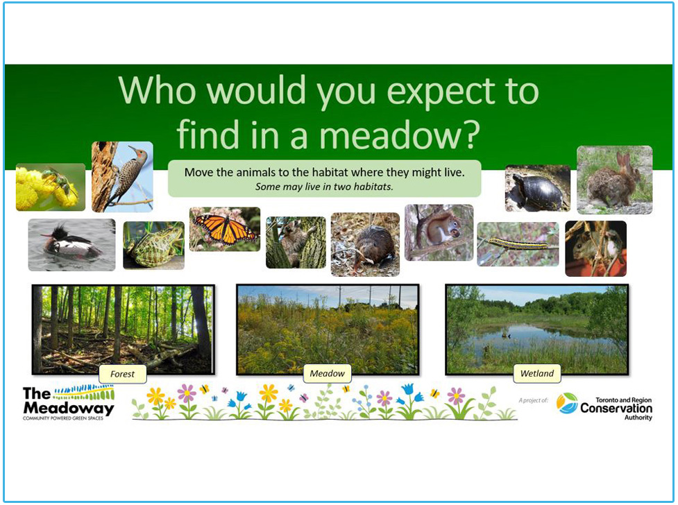 The Meadoway e-Learning resource for kindergarten