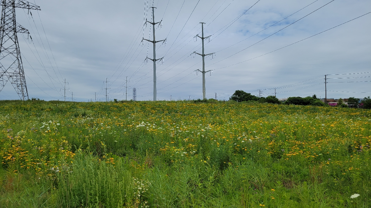 section of The Meadoway east of Bermondsey Road in 2021 before meadow restoration