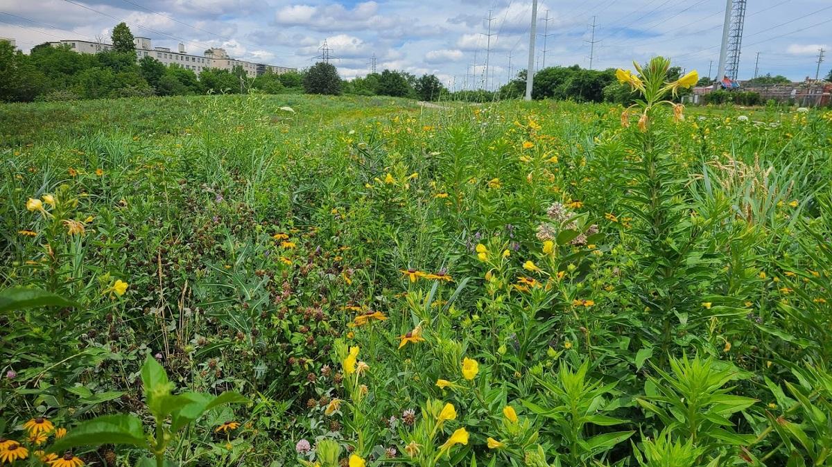 Jonesville Allotment garden in 2021 after meadow restoration
