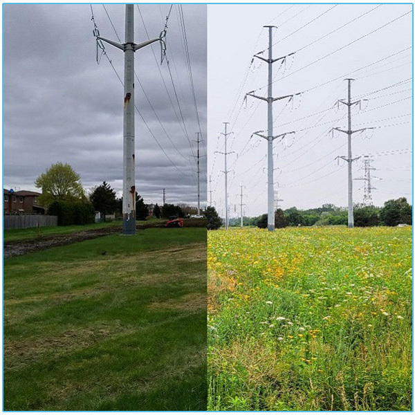before and after image of meadow restoration